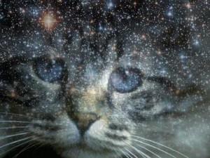 Djur som budbärare del II: katten