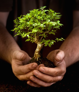 träd i händer