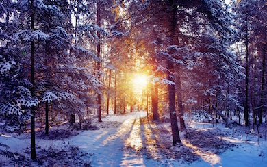 sunset landscapes nature winter snow trees forest hk