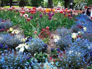 Blomstertid med lust och fägring stor