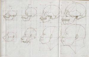 Rasbiologi och mätning av skallar
