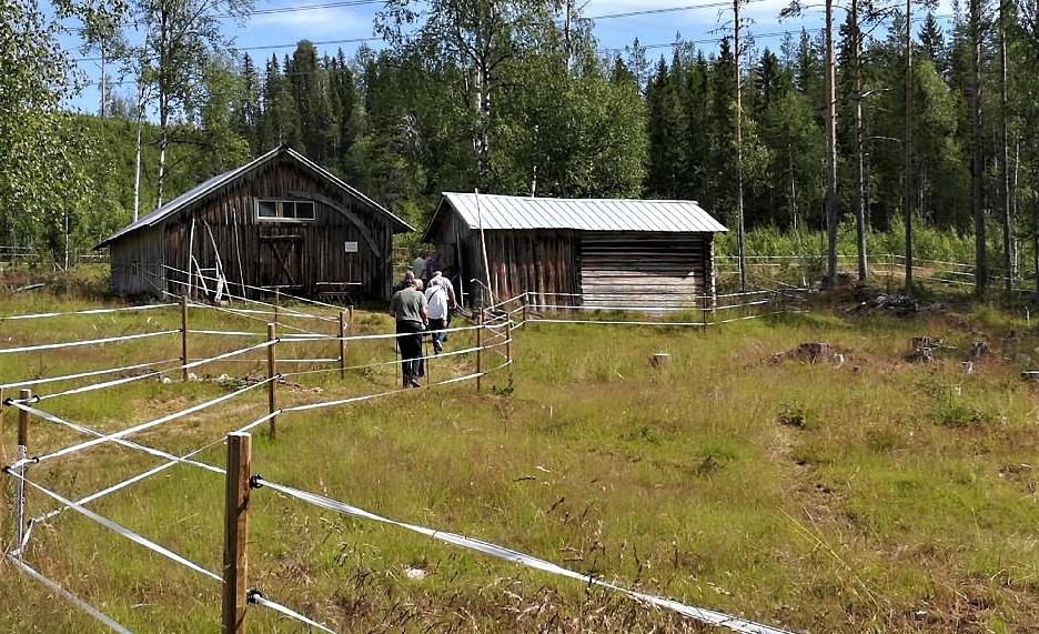 Fäbod i Åsele vid Ava sjö. Foto Kersti Wistrand