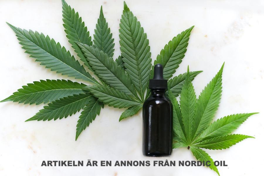 Cannabisplantan och CBD olja. Foto: Kimzy Nanney. Licens: Unsplash.com
